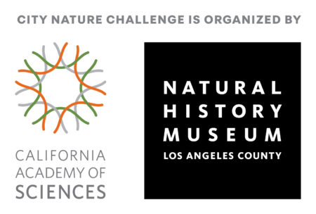 City Nature Challenge BioBlitz @ Descanso Gardens | La Cañada Flintridge | California | United States