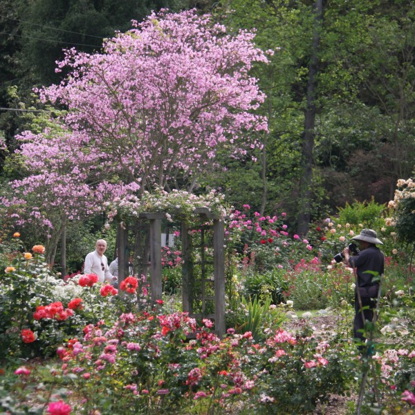 Visit Descanso Gardens Guild