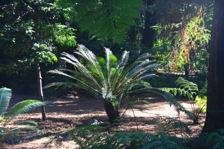 Ancient Forest cycad