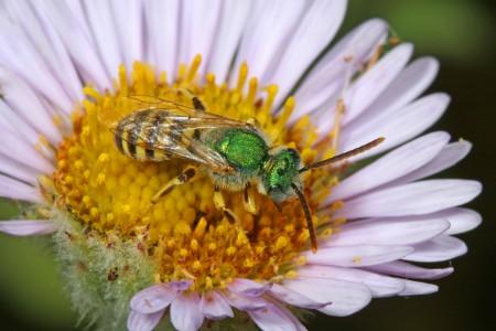 Habitat bee