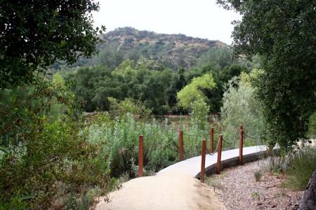 Oak Woodland garden