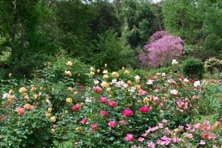 Rose Garden landscape