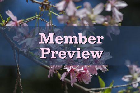 Cherry Blossom Member Preview
