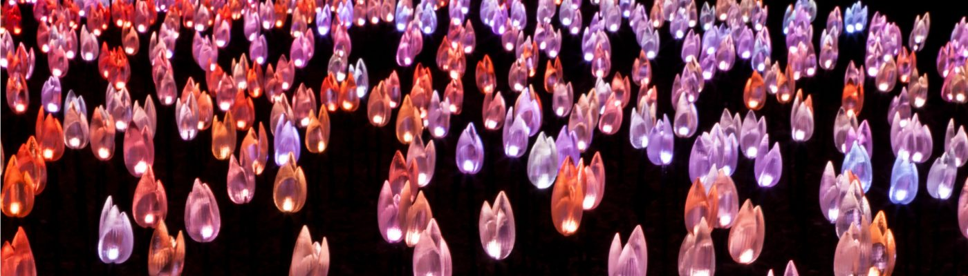 Enchanted forest of light tickets descanso gardens guild