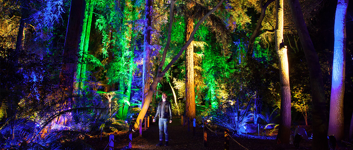 Homepage descanso gardens guild - Descanso gardens enchanted forest of light ...