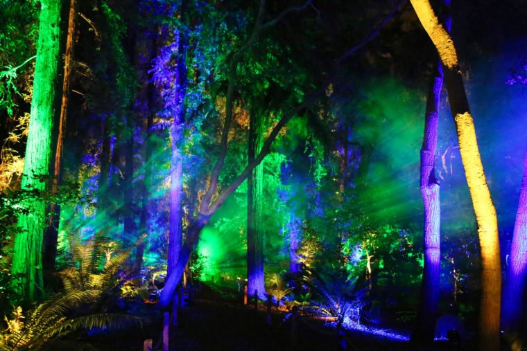 Enchanted Forest Of Light Descanso Gardens Guild