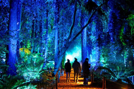 Enchanted forest of light tickets descanso gardens guild - Descanso gardens enchanted forest of light ...