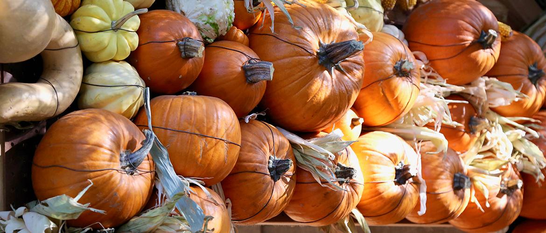 Descanso Gardens Halloween 2020 Halloween Slider   Descanso Gardens Guild